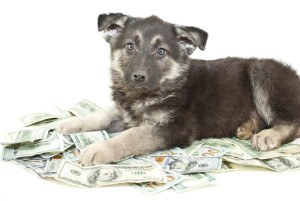 It takes at least five months to probate an estate, usually more. A pet trust can care for your pet immediately.
